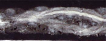 pvc-250-black-cbs